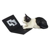 ノートPCをジャマするにゃんこがカプセルに「じゃま猫 いい加減どいてください!」