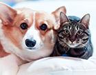 ペット保険を詳しく比較