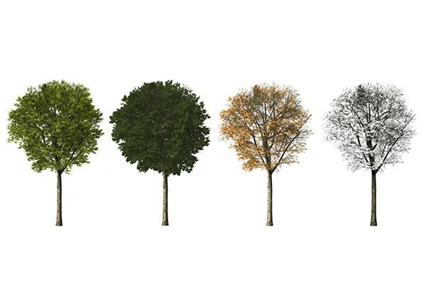 季節によって大きく異なる電力消費量