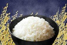 人気定番のお礼の品!ふるさとの美味い米特集