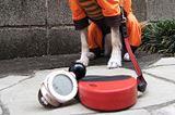 実は湿度も重要! 熱中症の危険度を警告してくれる「コンディションセンサー」で愛犬を守る
