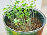 ベランダでも手軽に家庭菜園が実現できる「栽培キット」