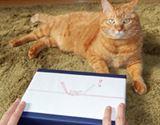 """親愛なるお猫様へ。最高の献上品""""ねこぶし""""買ってみた"""