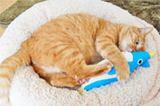猫が本当に喜んだ! 傑作猫用グッズ20選【猫を愛するすべての人へ】