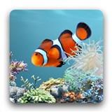 aniPet海洋水族館ライブ壁紙(無料版) アプリ画像