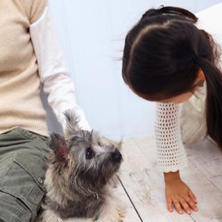 ペットと快適に暮らすリフォーム術