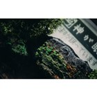 「世界最古のテプラ プレゼントキャンペーン」※画像はイメージ