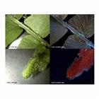 「蛍光デジタルマイクロスコープ」イメージ