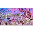 HDならではの高解像度映像。花びらがとても美しく表現できていた