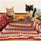 8位 ネコ専用こたつ付きみかん「猫と、こたつと、思い出みかん」が正式発売…12月18日