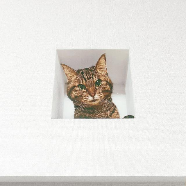 「壁からネコ/妄想マッピングステッカー」