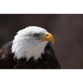 鳥の瞳検出