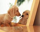 ペット可の賃貸物件を探す