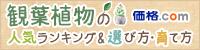 観葉植物の人気ランキング&選び方・育て方