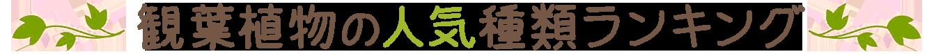 観葉植物の人気種類ランキング