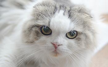 猫の脳・神経の病気