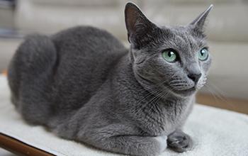 猫の消化器の病気