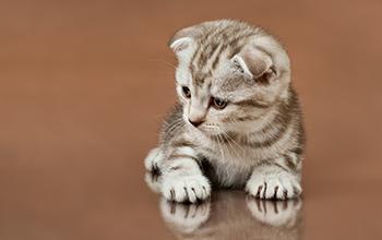 猫の耳の病気