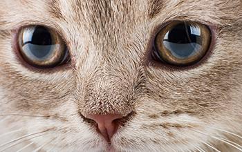 猫の目の病気