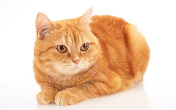 猫の心臓・血液の病気