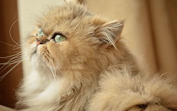猫のホルモンの病気