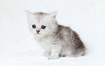 猫の感染症の病気
