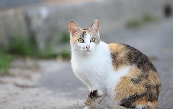 猫のその他の病気