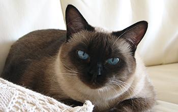猫の泌尿器・生殖器の病気