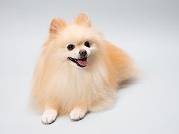 犬パルボウイルス感染症