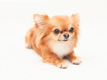 犬の肺水腫