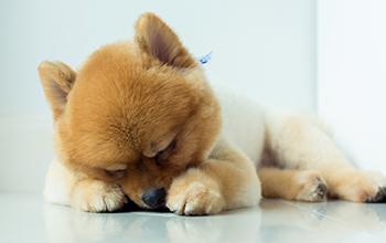 犬の感染症の病気