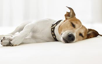 犬の呼吸器の病気