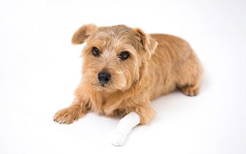 犬の骨・関節の病気