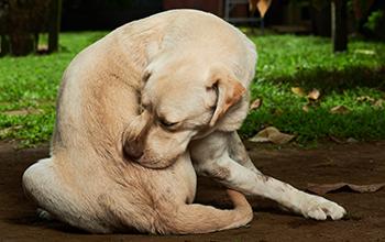 犬の皮膚の病気