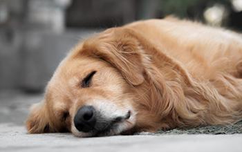 犬のホルモンの病気