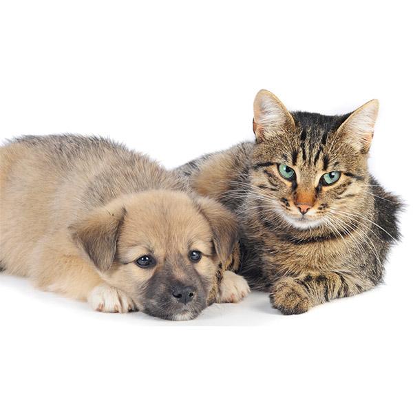 ペット保険とは