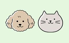 ペット保険に加入する際に知っておきたい4つのポイント