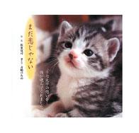 猫 写真集