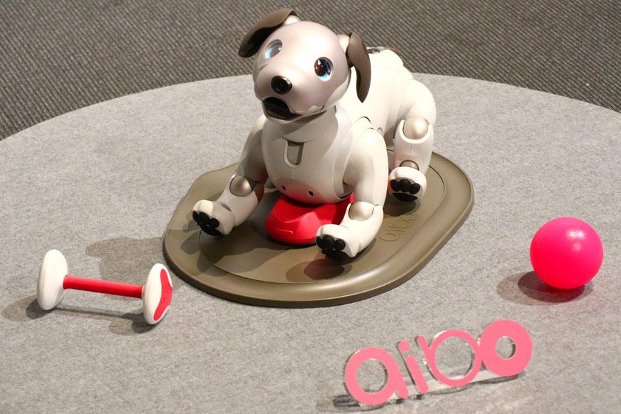 「aibo(アイボ)」が帰ってきた! 愛くるしい表情と滑らかな動きを動画でチェック