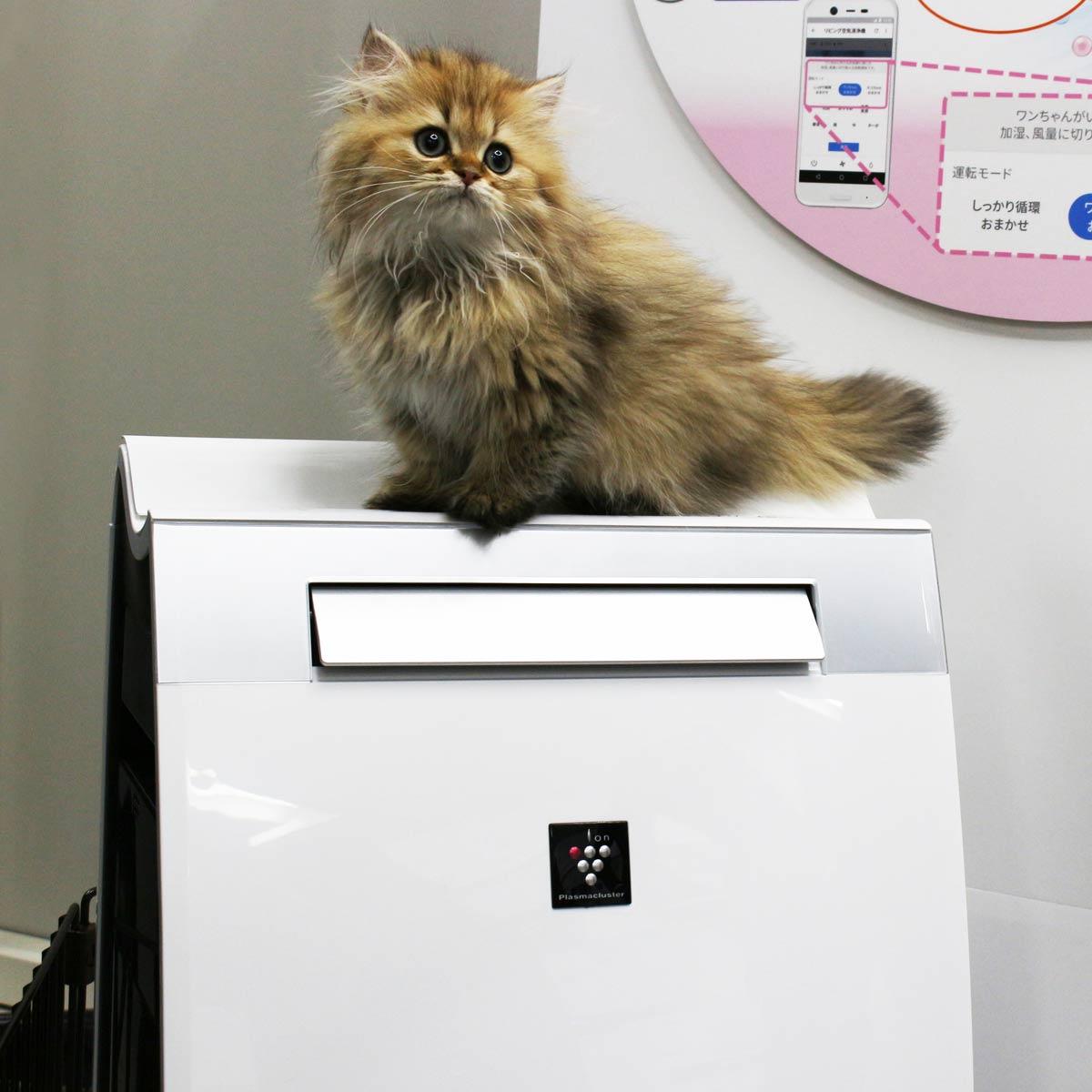 犬や猫を飼っている人に最適! 「ペット専用運転」を搭載したシャープの加湿空気清浄機