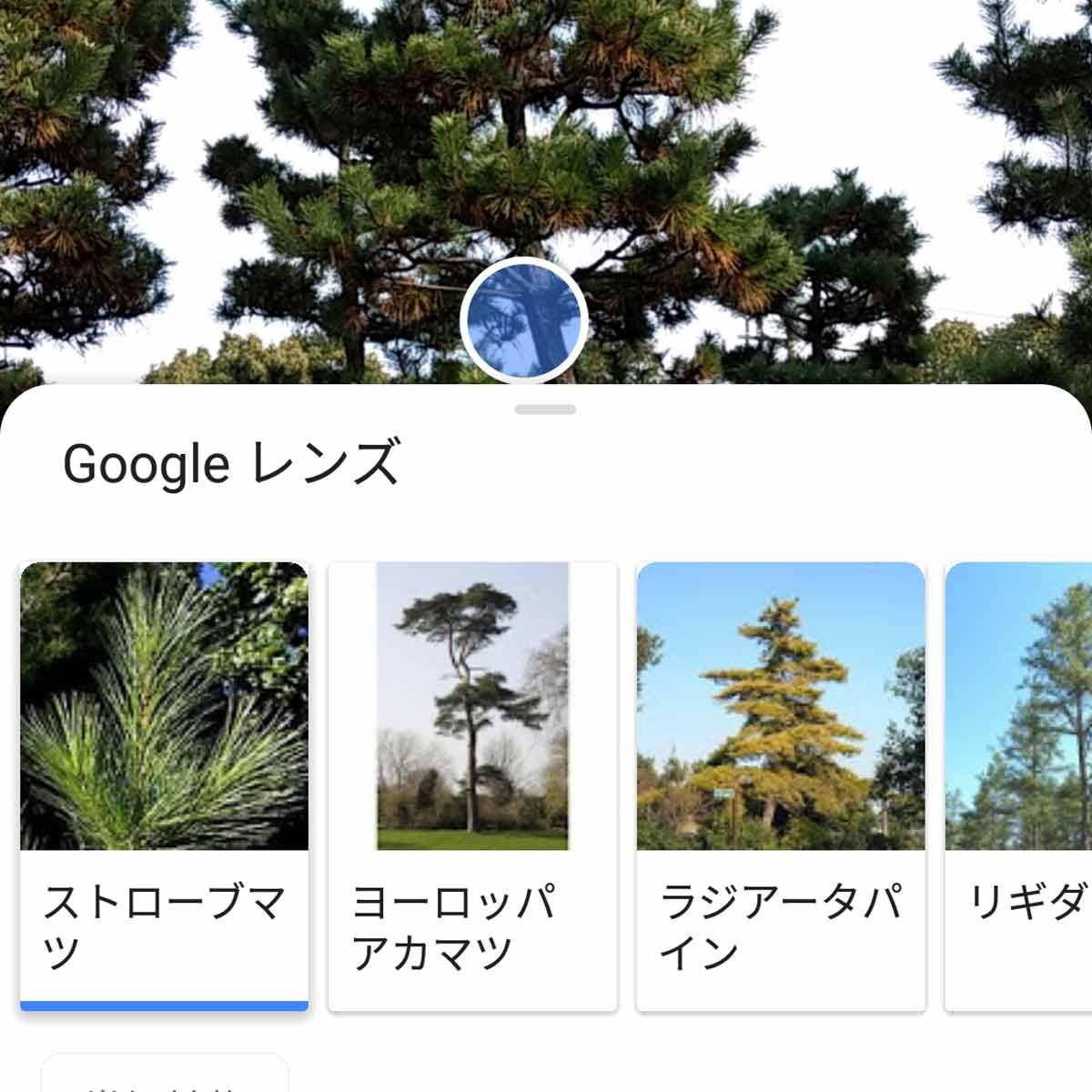 わからないものはカメラで調べる! 「Googleレンズ」の使い方