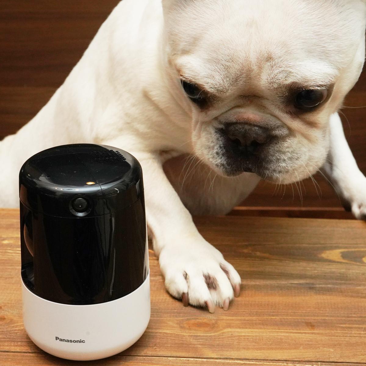 ペットのいる家庭もこれで安心!パナソニックのHDペットカメラで暑い夏を乗り切れ!