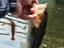 「ハリーシュリンプ4インチ」のバックスライドはスゴかった!