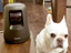 パナソニックのHDペットカメラ最新モデルを自宅のペット達と一緒にレビュー