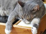 愛猫の毛玉吐き防止に!ペロっとなめさせて、お腹の毛玉を除去!