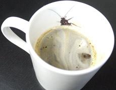 【閲覧注意】ゴキブリ入りマグで珈琲はいかが?