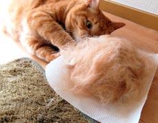「おもしろいくらい毛が取れるブラシ」の取れっぷりがすごい!