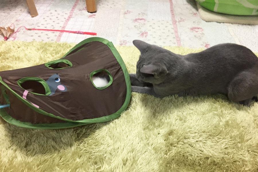 """愛猫家必見! 猫の""""好きな物だけ""""でできたおもちゃが秀逸すぎる"""