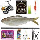 20cmオーバーも! 出世魚「コノシロ」は釣り方簡単、手応え抜群、食べておいしい
