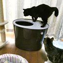 猫用トイレの新しい形! ニオイや砂の飛び散りに、もう悩まニャイ♪